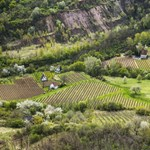 New York Times: a tokaji aszú a világ egyik legjobb édes bora