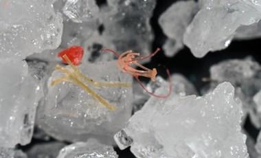 Néhány kutató szerint világméretű katasztrófát okozhatnak a mikroműanyagok
