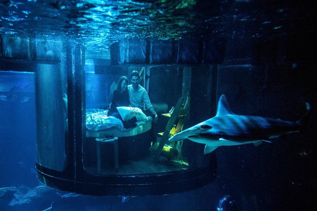 AFP - Nagyítás - Állati 2016 - 16.12.31. -  Alastair Shipman és barátnője Hannah Simpson vízalatti szobájuk kilátását csodálják. A pár az Airbnb online szállásközvetítő által meghírdetett verseny gyözteseként, egy éjszakát tölthetett el cápák között az Aq
