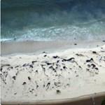 Bálnatetemek borítják Chile tengerpartját, nem tudják a pusztulás okát