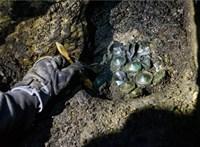 Már külföldön is híre ment az Aggteleki-cseppkőbarlangban felfedezett kincseknek