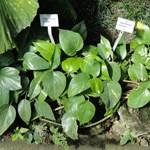 Tartson génmanipulált dísznövényt, tisztább lesz tőle a levegő!
